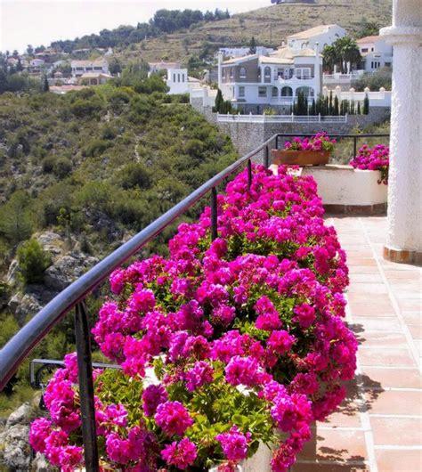 Den Balkon Mit Passenden Pflanzen Und Blumen Im September Beleben by Balkongestaltung Mit Pflanzen Hilfreiche Tipps Und Beispiele