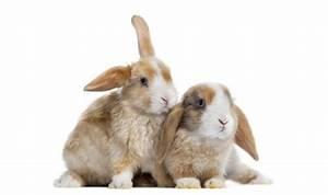 Vaccino Mixomatosi per il Coniglio Mondopets it