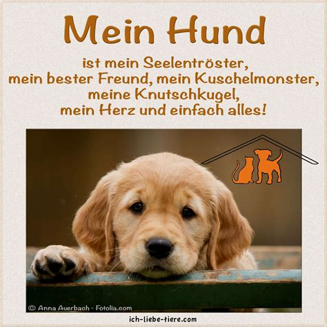 hunde zitate quotes of the day
