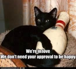 cats bowling basement cat s behavior became erratic after falling