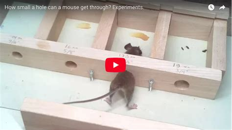 How Small A Hole Can A Mouse Squeeze Through? A Shrew