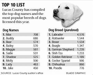 funny boy dog names 25 cool wallpaper