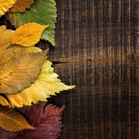 High Resolution Fall Foliage Pictures Autumn Background Leaves Border On Dark Wood Stock Photo Colourbox