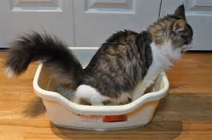 what causes cats to urinate outside of litter box woof talk right meow cat outside litter box