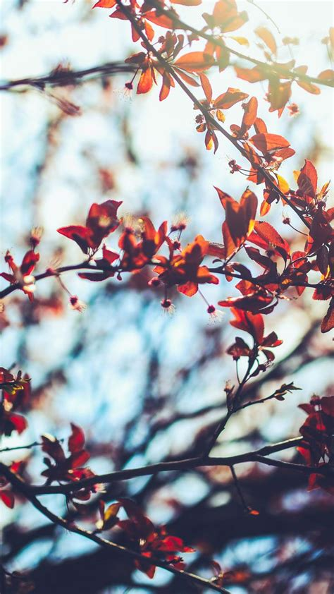Autumn Wallpapers For Phone Hd by Free Autumn Iphone Wallpaper Collection It At