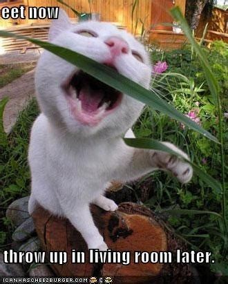 cute animals  funny  images