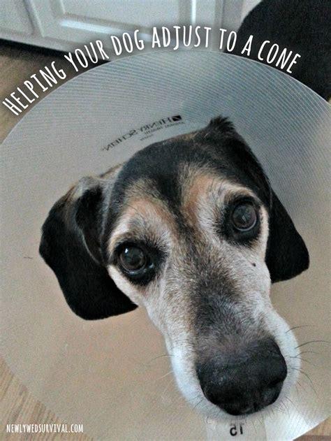 dog adjust   cone collar brightmind