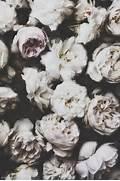 Photography Tumblr Vin...Vintage Flowers Tumblr