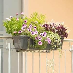 Ganzjahresbepflanzung Für Balkonkästen : halterung f r k sten am balkon oder an gel ndern vario fix ~ Michelbontemps.com Haus und Dekorationen