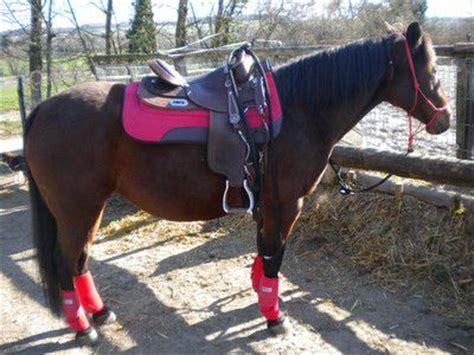 couleur equipement jument baie western  forum cheval
