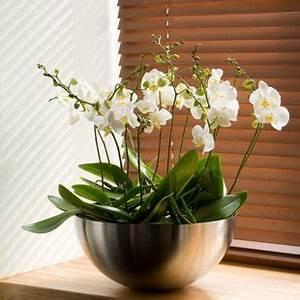 Orchideen Ohne Topf : zimmerpflanzen wohin kr ger jagdzimmer zimmerpflanzen orchideen e orchideen topf ~ Eleganceandgraceweddings.com Haus und Dekorationen