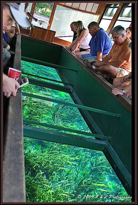 Glass Bottom Boat Tours In Destin Florida by Ocala Florida Photos Taking A Tour In A Glass Bottom
