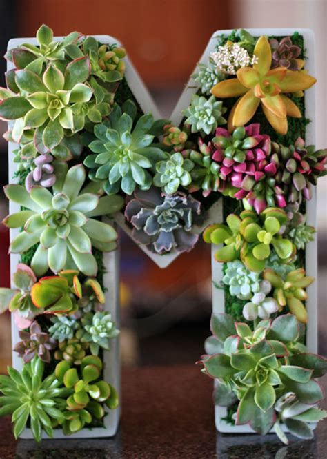 featured shop rooted  succulents etsy journal