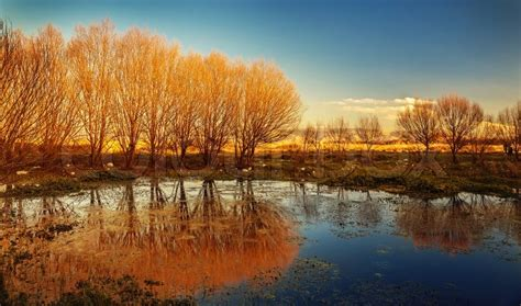 beautiful autumn landscape dry trees blue sky tree
