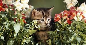 stop cat from on bed how to stop cats from using a flower bed as a toilet ehow uk