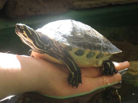 animalerie tortue d eau douce