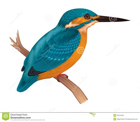 river kingfishers clipart   cliparts