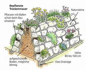 Pflanzen Für Trockenmauer : bepflanzte trockenmauer pflanzideen pinterest garten friesenwall und trockenmauer ~ Orissabook.com Haus und Dekorationen