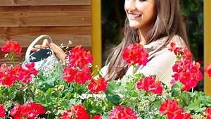 Balkonblumen Richtig Pflanzen : geranien pflegen so pflanzen sie die beliebten balkonblumen richtig ~ Frokenaadalensverden.com Haus und Dekorationen