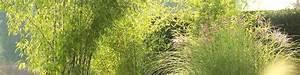 Winterharte Gräser Balkon : pflanzen balkon sichtschutz affordable inspiration balkon sichtschutz knstliche pflanzen und ~ Buech-reservation.com Haus und Dekorationen