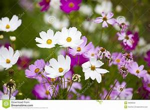 Beautiful Flowers In The Garden Stock Photo