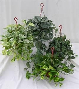 Plante Verte D Appartement : plantes vertes d appartement ~ Premium-room.com Idées de Décoration