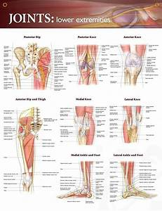 148 Best Anatomy And Physiology Images On Pinterest
