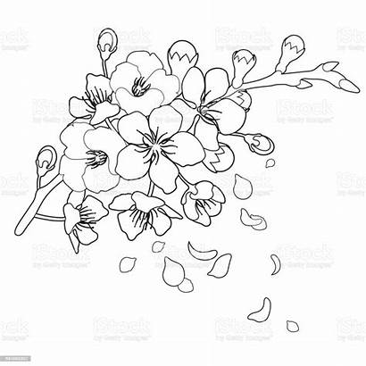 Sakura Falling Petals Flowers Graphic Vector Drawing
