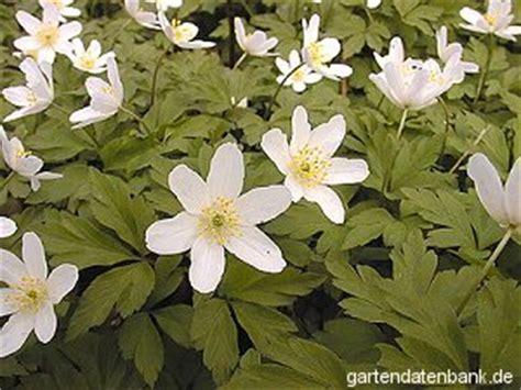 wildblumen lexikon mit bildern wildpflanzen lexikon 1200 arten mit bild infos heimische wildblumen wiesenblumen
