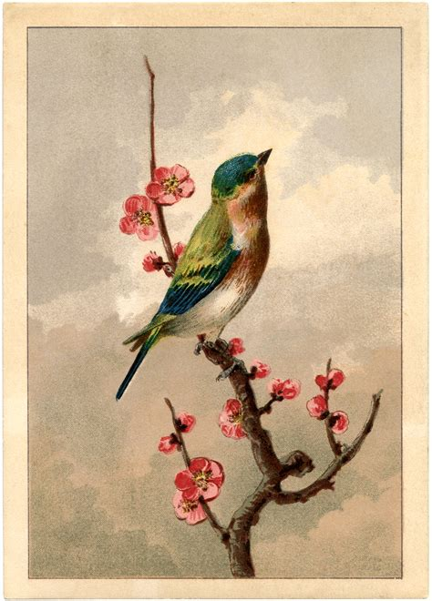 clipart foto free bird picture with blossoms the graphics