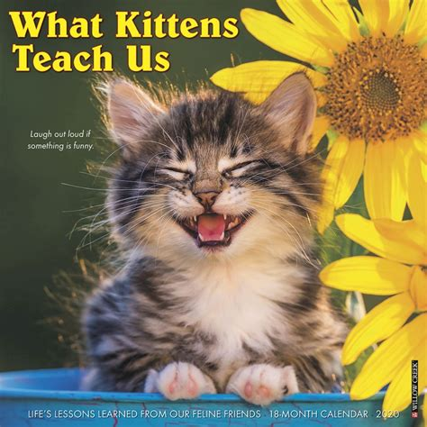 kittens teach wall calendar