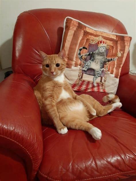 hilarious cats  pics