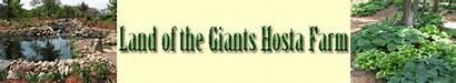 Giants Land Farm Garden Milton Hosta Giant
