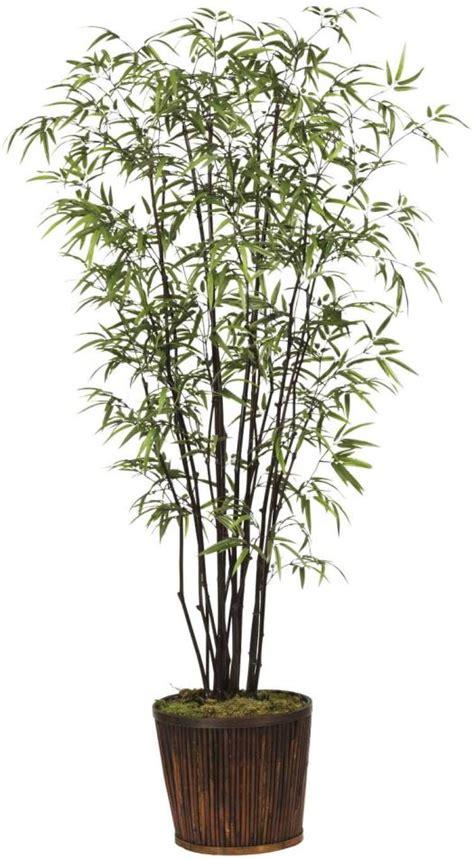 bambu in vaso consigli invernali per il bamboo in vaso in balcone