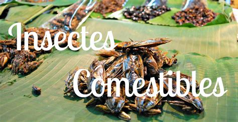 cuisine insectes comestibles insectes comestibles picture and images