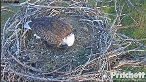 Southwest Florida Eagle Cam - 1 465 Photos