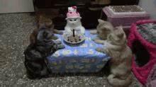 Purrfday Party GIF - Birthday BirthdayPart CatParty ...