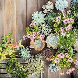 Plantes Pour Jardin Japonais Exterieur : plantes grasses ext rieur conseils et id es pour ~ Premium-room.com Idées de Décoration