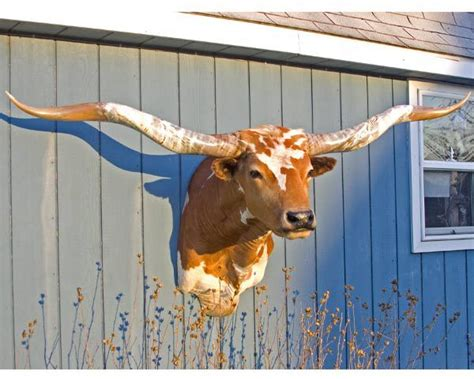 1000+ Images About Steer Mounts. On Pinterest