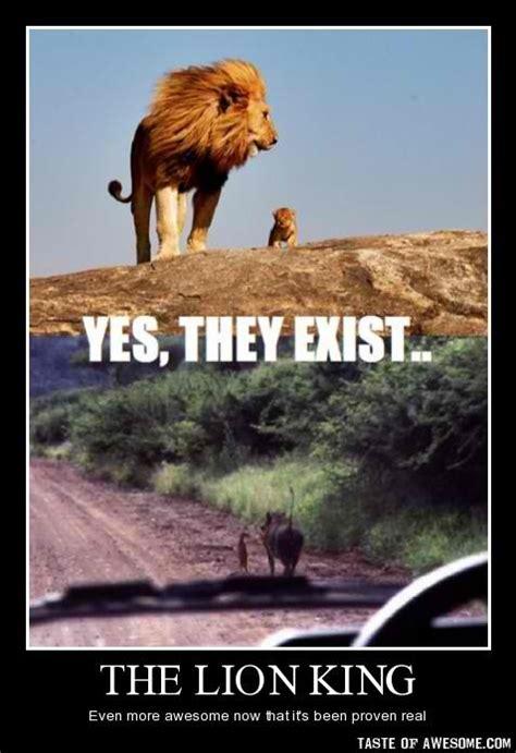 Lions Memes - 85 best images about lion memes on pinterest