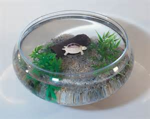Turtle and Small Bowl