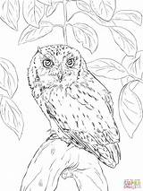 Owl Coloring Pages Realistic Barn Screech Detailed Eastern Printable Horned Flying Drawing Owls Cute Adults Snowy Eared Short Getcolorings Drawings sketch template