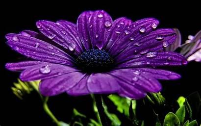 Purple Flower Screen Android Apkpure