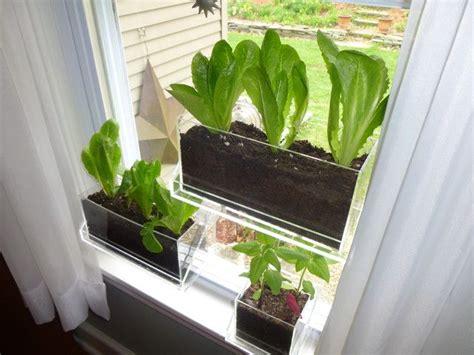 Indoor Window Garden by Romaine Lettuce Window Apartment