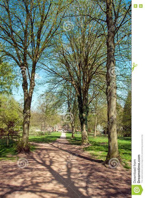 alberi e siluette di primavera lungo un percorso parco fotografia stock immagine di
