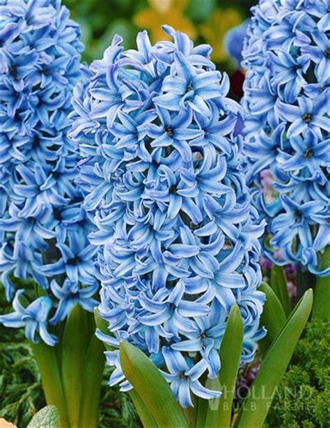 Best 25+ Blue flowers ideas on Pinterest