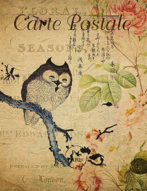owl vintage french postcard  stock photo public