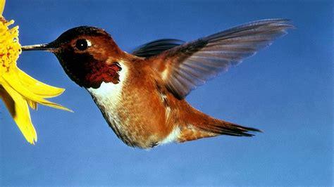 two best ways to attract hummingbirds gardening tips