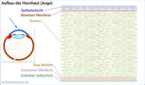 Aufbau Schichten by Hornhaut Menschliches Auge