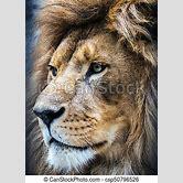 lion-roaring-tattoo-side-view